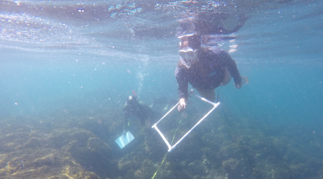 Take part in underwater surveys with professional researching support